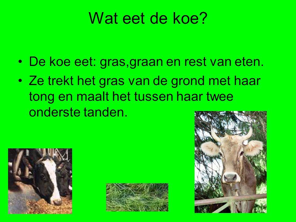 Wat eet de koe? De koe eet: gras,graan en rest van eten. Ze trekt het gras van de grond met haar tong en maalt het tussen haar twee onderste tanden.