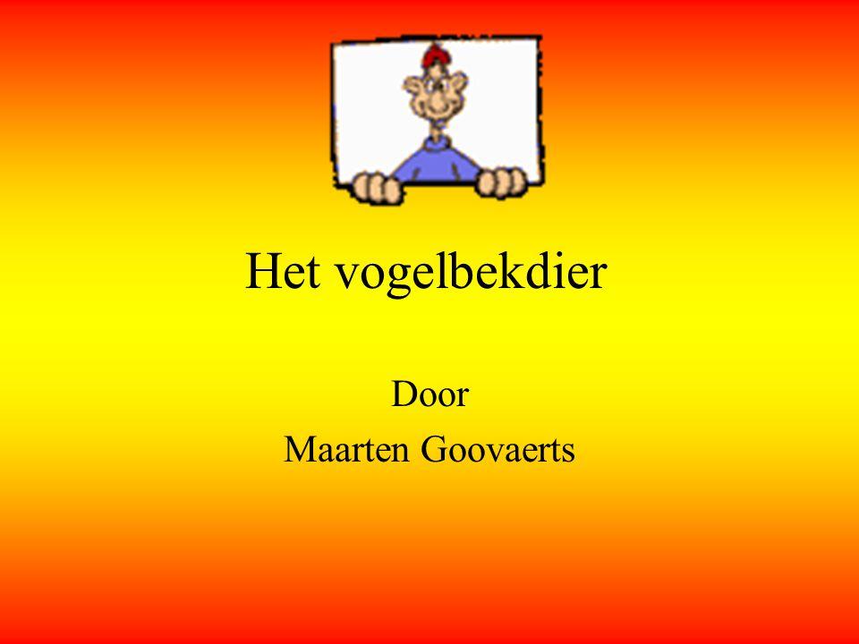 Het vogelbekdier Door Maarten Goovaerts
