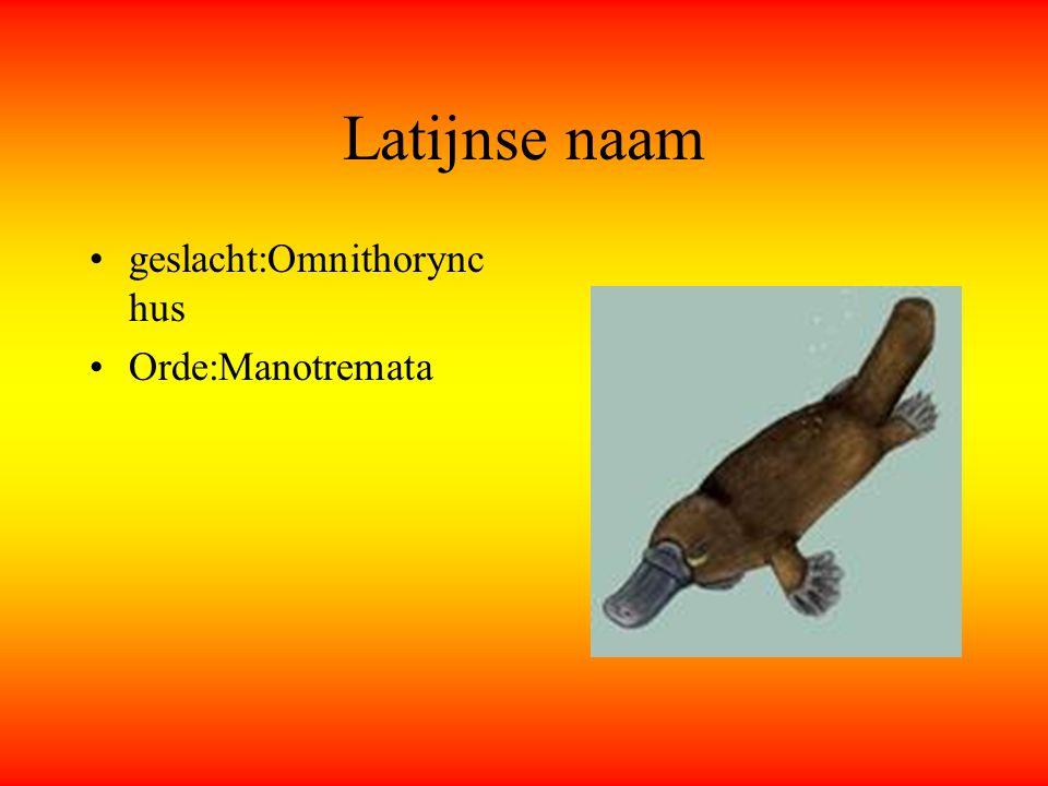 Latijnse naam geslacht:Omnithorync hus Orde:Manotremata