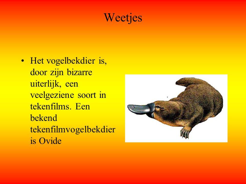 Weetjes Het vogelbekdier is, door zijn bizarre uiterlijk, een veelgeziene soort in tekenfilms. Een bekend tekenfilmvogelbekdier is Ovide