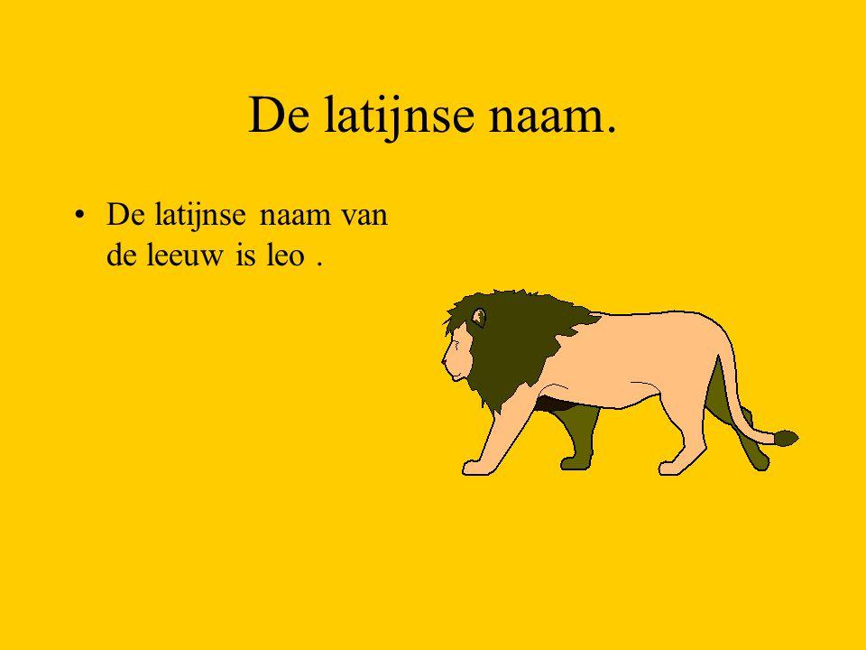 De latijnse naam. De latijnse naam van de leeuw is leo.