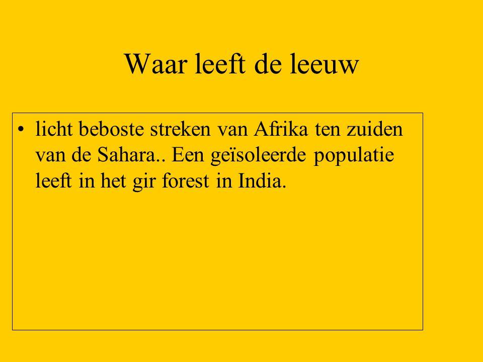 Waar leeft de leeuw licht beboste streken van Afrika ten zuiden van de Sahara.. Een geïsoleerde populatie leeft in het gir forest in India.