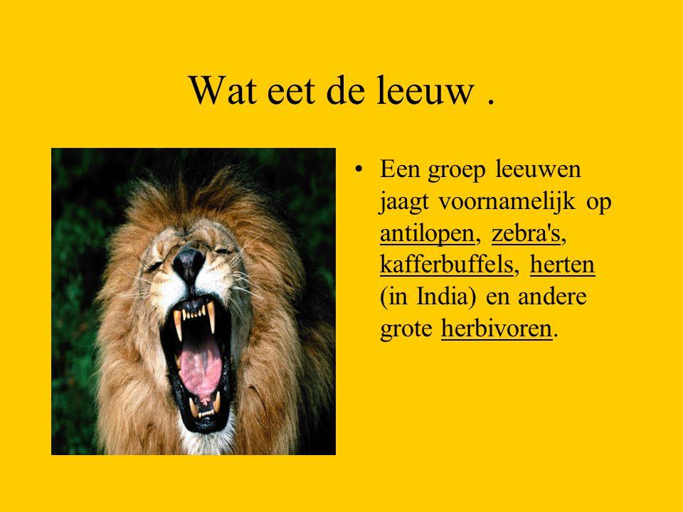 Wat eet de leeuw. Een groep leeuwen jaagt voornamelijk op antilopen, zebra's, kafferbuffels, herten (in India) en andere grote herbivoren.