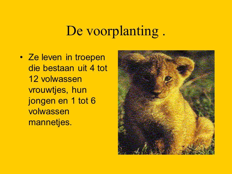 De voorplanting. Ze leven in troepen die bestaan uit 4 tot 12 volwassen vrouwtjes, hun jongen en 1 tot 6 volwassen mannetjes.