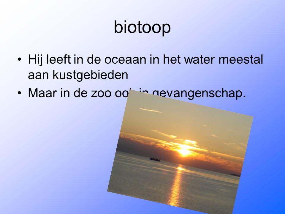 biotoop Hij leeft in de oceaan in het water meestal aan kustgebieden Maar in de zoo ook in gevangenschap.
