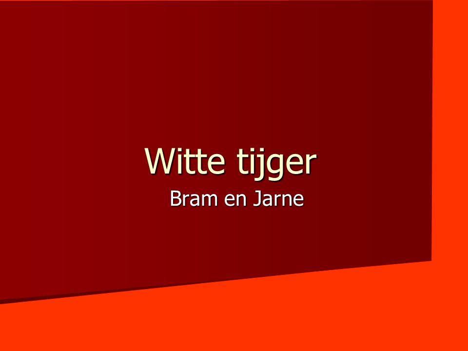 Witte tijger Bram en Jarne
