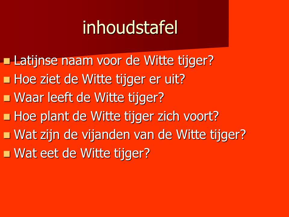inhoudstafel Latijnse naam voor de Witte tijger? Latijnse naam voor de Witte tijger? Hoe ziet de Witte tijger er uit? Hoe ziet de Witte tijger er uit?