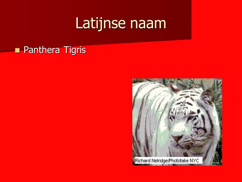 Latijnse naam Panthera Tigris Panthera Tigris