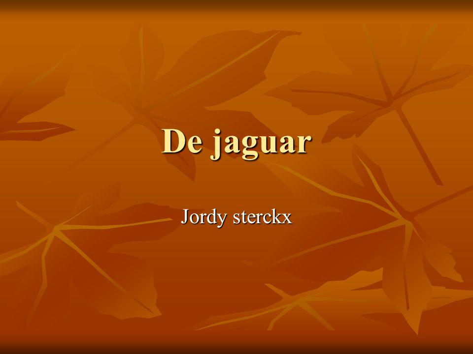 inhoudstafel Wetenschappelijke naam Wetenschappelijke naam Hoe zie de jaguar er uit Hoe zie de jaguar er uit Waar leeft de jaguar Waar leeft de jaguar Wat eet de jaguar Wat eet de jaguar Voortplanting van de jaguar Voortplanting van de jaguar Vijanden van de jaguar Vijanden van de jaguar