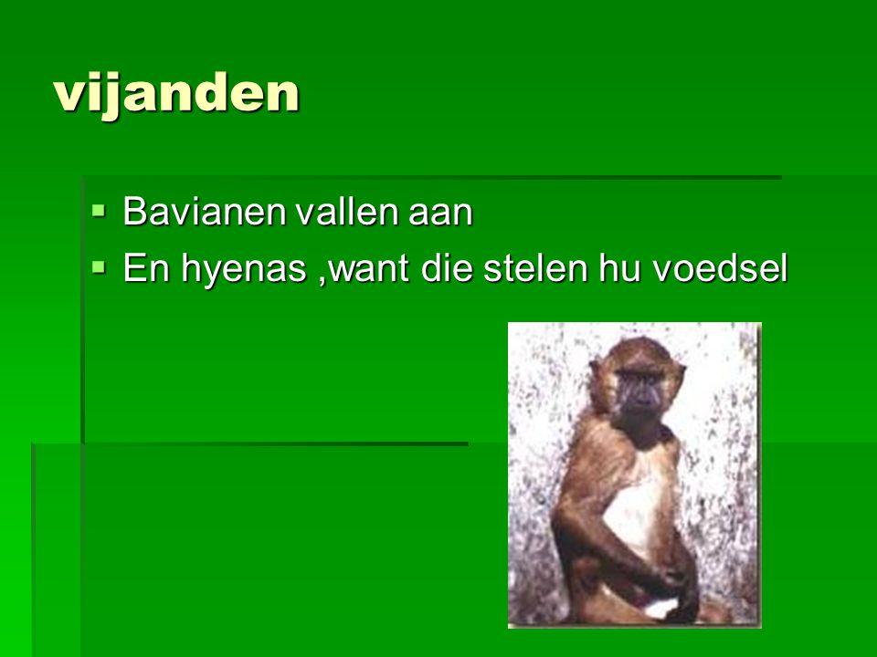 vijanden  Bavianen vallen aan  En hyenas,want die stelen hu voedsel