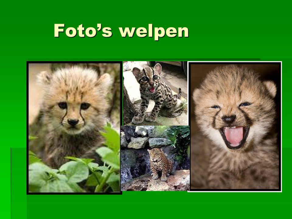 Foto's welpen Foto's welpen