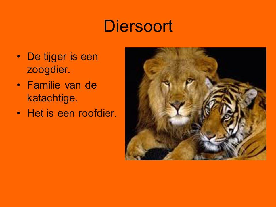 Diersoort De tijger is een zoogdier. Familie van de katachtige. Het is een roofdier.