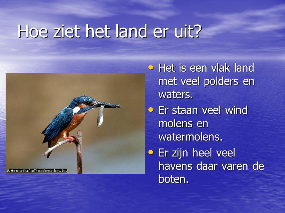 Hoe ziet het land er uit? Het is een vlak land met veel polders en waters. Het is een vlak land met veel polders en waters. Er staan veel wind molens
