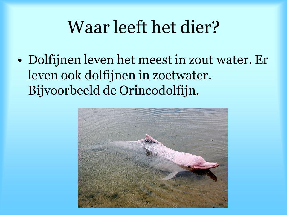 Waar leeft het dier? Dolfijnen leven het meest in zout water. Er leven ook dolfijnen in zoetwater. Bijvoorbeeld de Orincodolfijn.