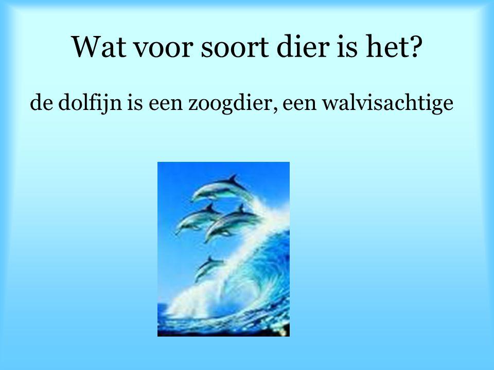 Wat voor soort dier is het? de dolfijn is een zoogdier, een walvisachtige