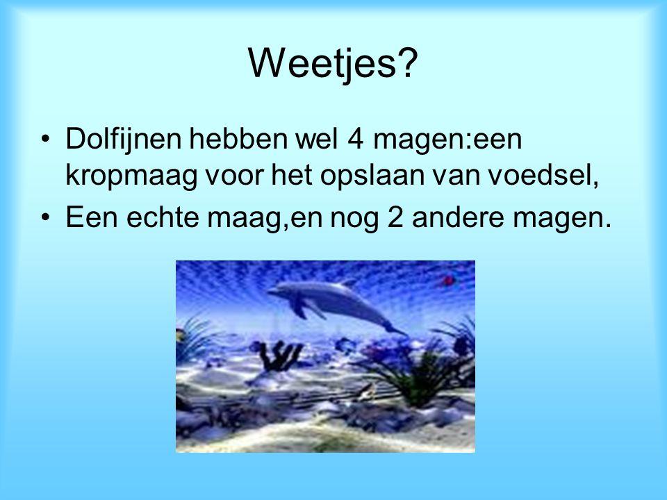 Weetjes? Dolfijnen hebben wel 4 magen:een kropmaag voor het opslaan van voedsel, Een echte maag,en nog 2 andere magen.