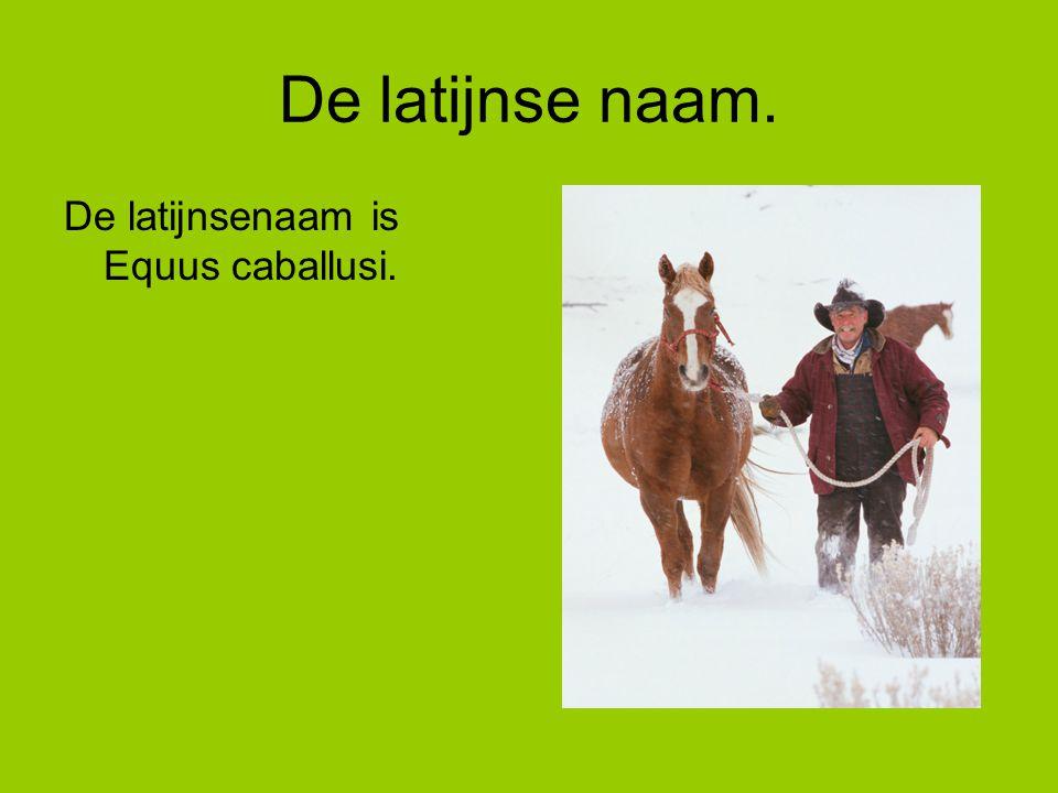 De latijnse naam. De latijnsenaam is Equus caballusi.