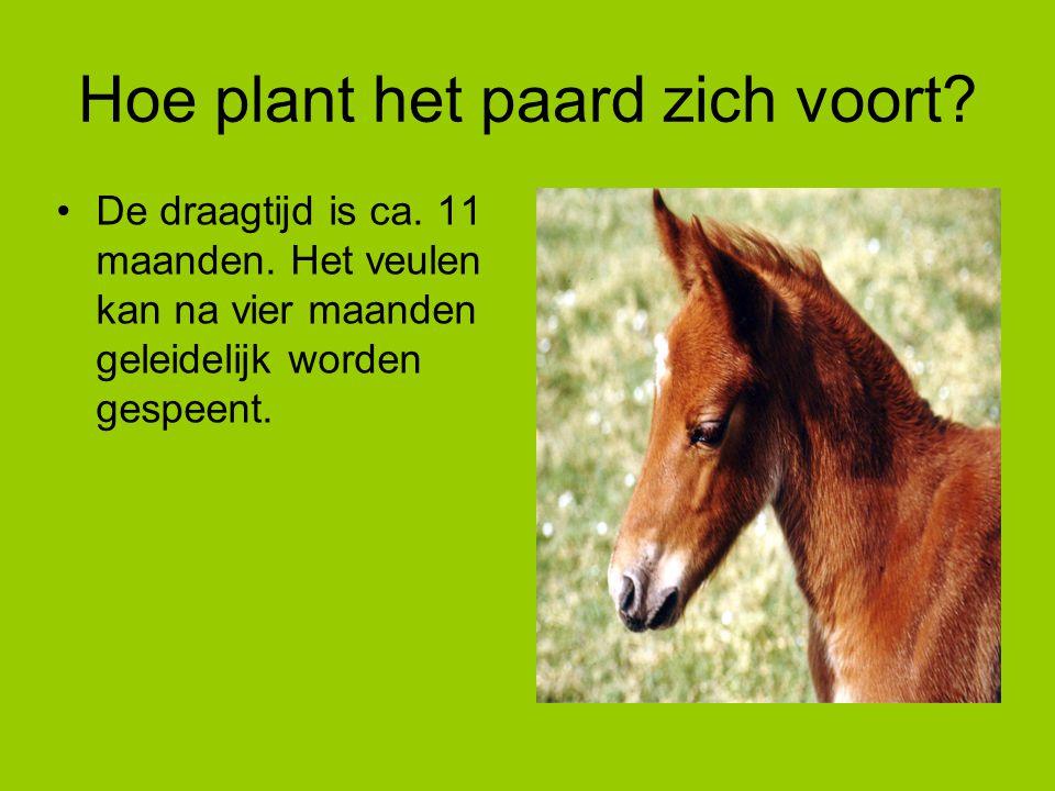 Hoe plant het paard zich voort? De draagtijd is ca. 11 maanden. Het veulen kan na vier maanden geleidelijk worden gespeent.