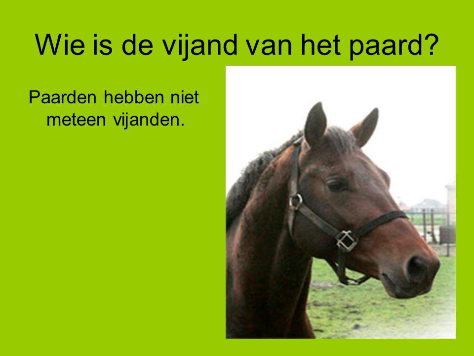 Wie is de vijand van het paard? Paarden hebben niet meteen vijanden.