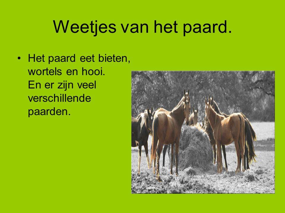 Weetjes van het paard. Het paard eet bieten, wortels en hooi. En er zijn veel verschillende paarden.