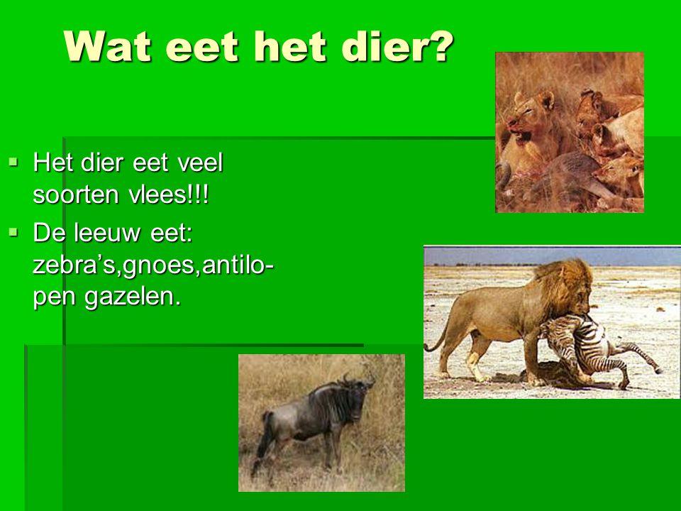 Wat eet het dier. Het dier eet veel soorten vlees!!.