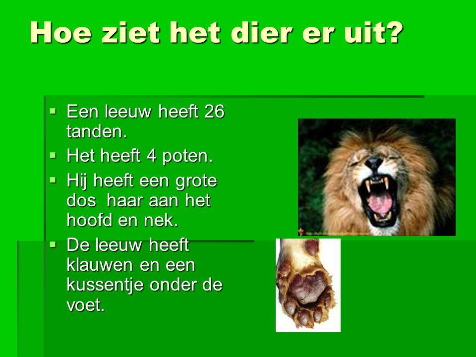 Hoe ziet het dier er uit. Een leeuw heeft 26 tanden.