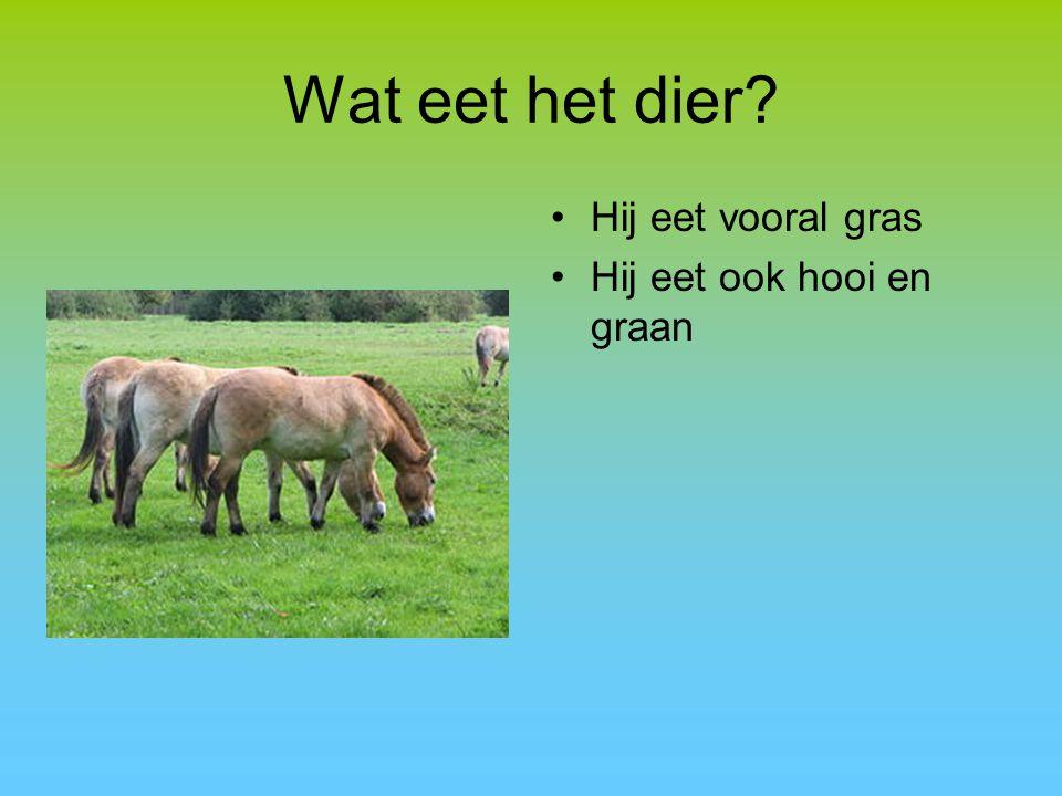 Wat eet het dier? Hij eet vooral gras Hij eet ook hooi en graan