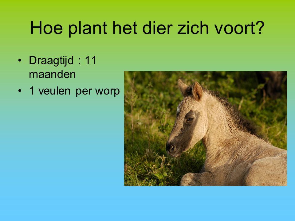 Hoe plant het dier zich voort? Draagtijd : 11 maanden 1 veulen per worp