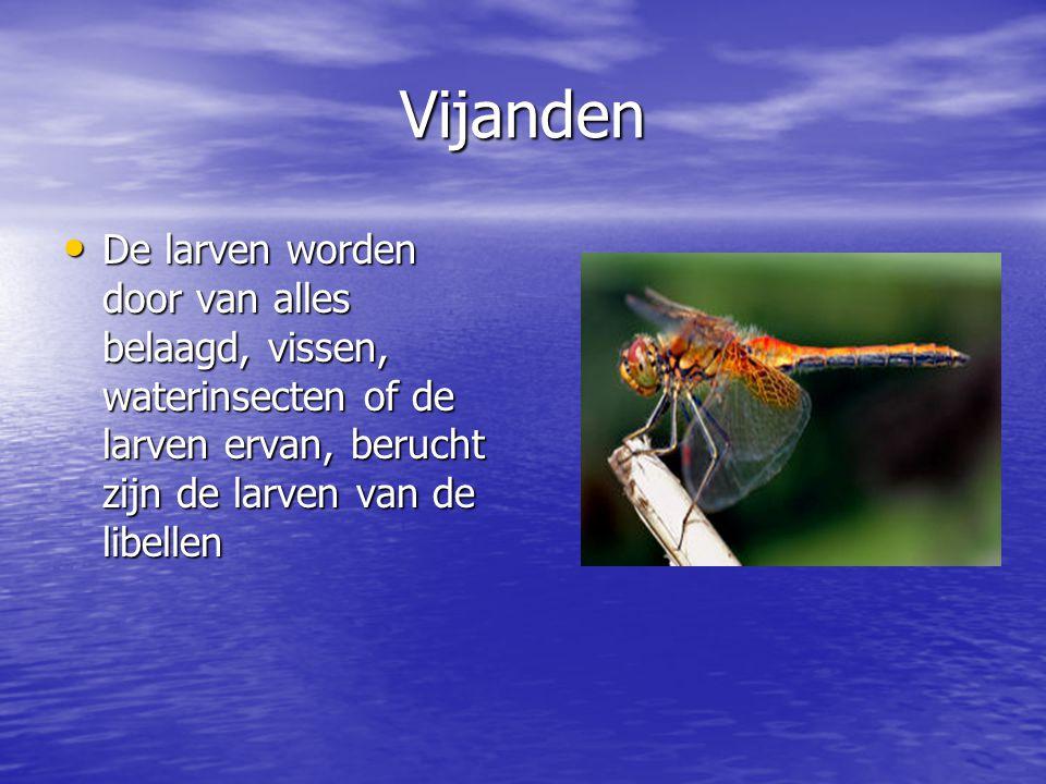 Vijanden De larven worden door van alles belaagd, vissen, waterinsecten of de larven ervan, berucht zijn de larven van de libellen De larven worden do
