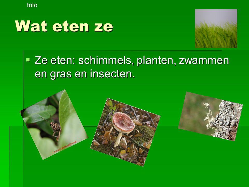 Wat eten ze  Ze eten: schimmels, planten, zwammen en gras en insecten. toto