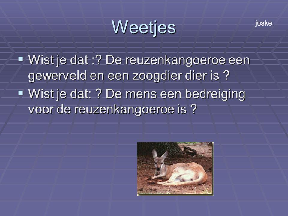 Weetjes  Wist je dat :. De reuzenkangoeroe een gewerveld en een zoogdier dier is .