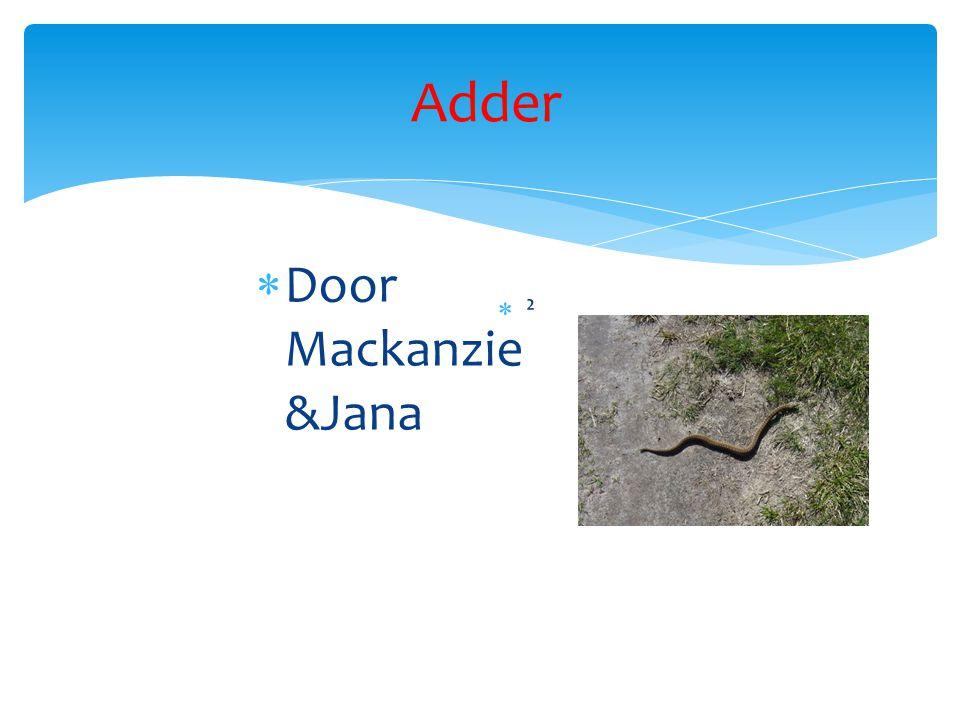 Adder  Door Mackanzie &Jana ²²