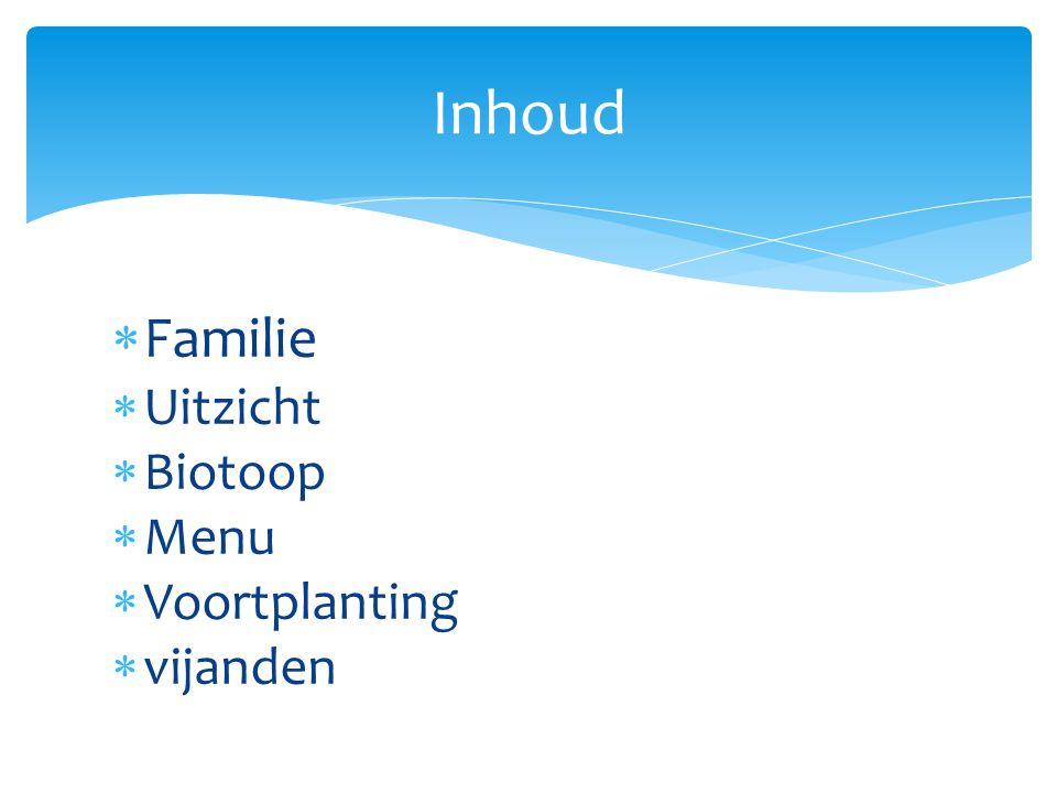  Familie  Uitzicht  Biotoop  Menu  Voortplanting  vijanden Inhoud