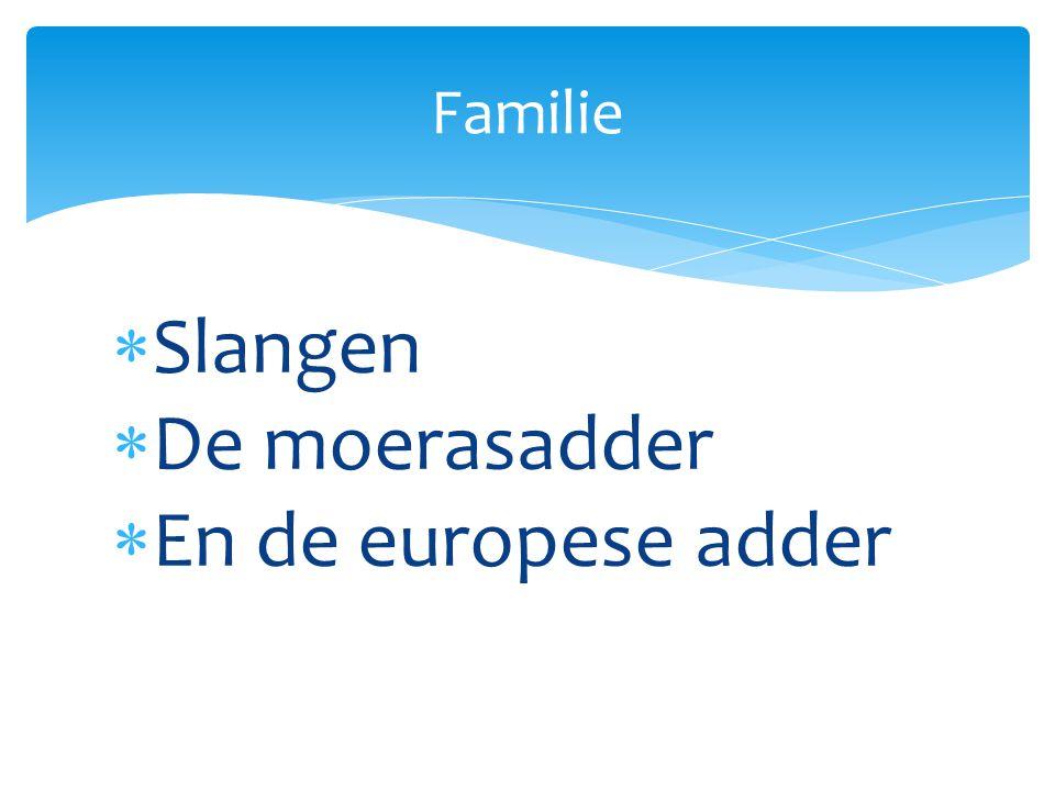  Slangen  De moerasadder  En de europese adder Familie