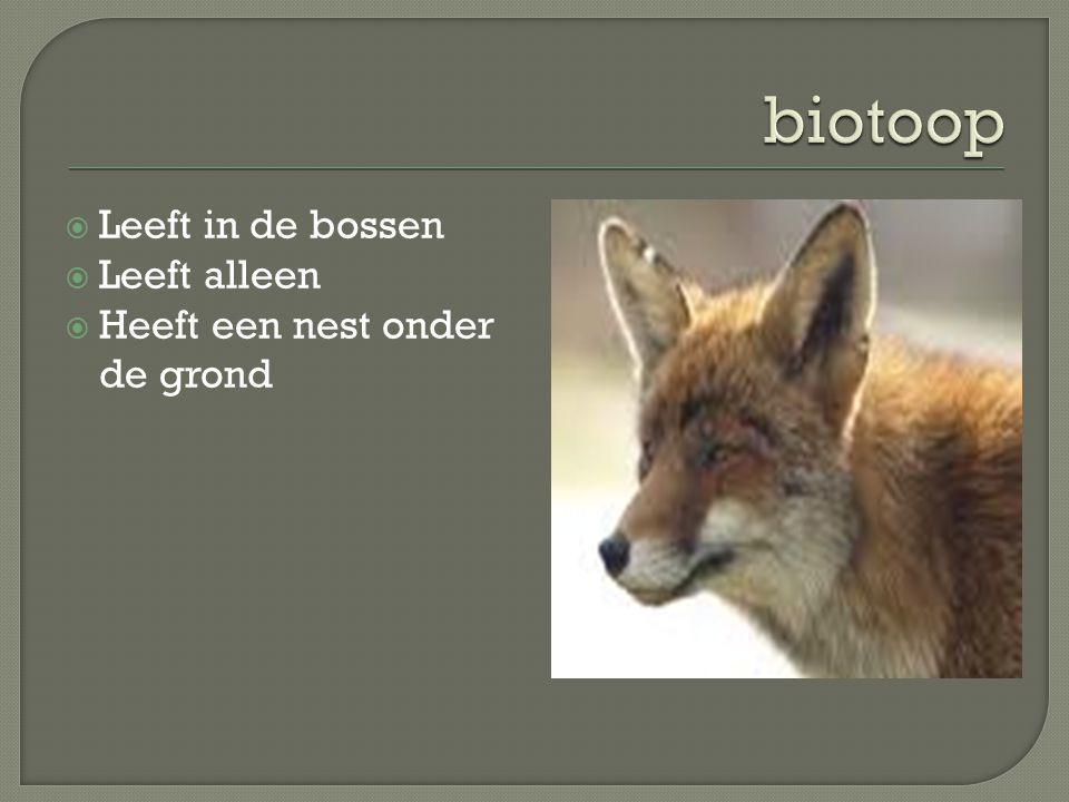  De vos is een zoogdier  Krijgt maximum 5 jongen  Ze worden in de lente geboren