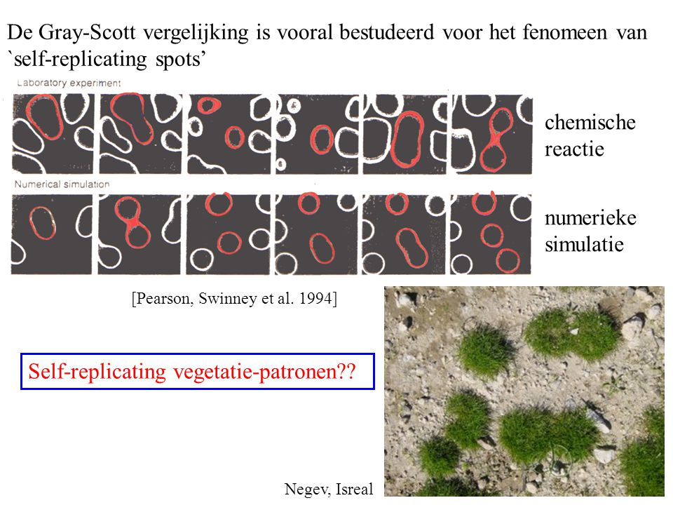 De Gray-Scott vergelijking is vooral bestudeerd voor het fenomeen van `self-replicating spots' [Pearson, Swinney et al. 1994] Self-replicating vegetat