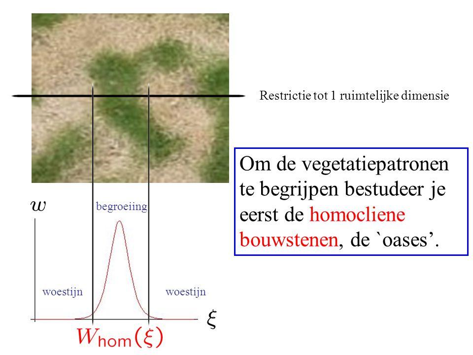 woestijn begroeiing Restrictie tot 1 ruimtelijke dimensie Om de vegetatiepatronen te begrijpen bestudeer je eerst de homocliene bouwstenen, de `oases'.