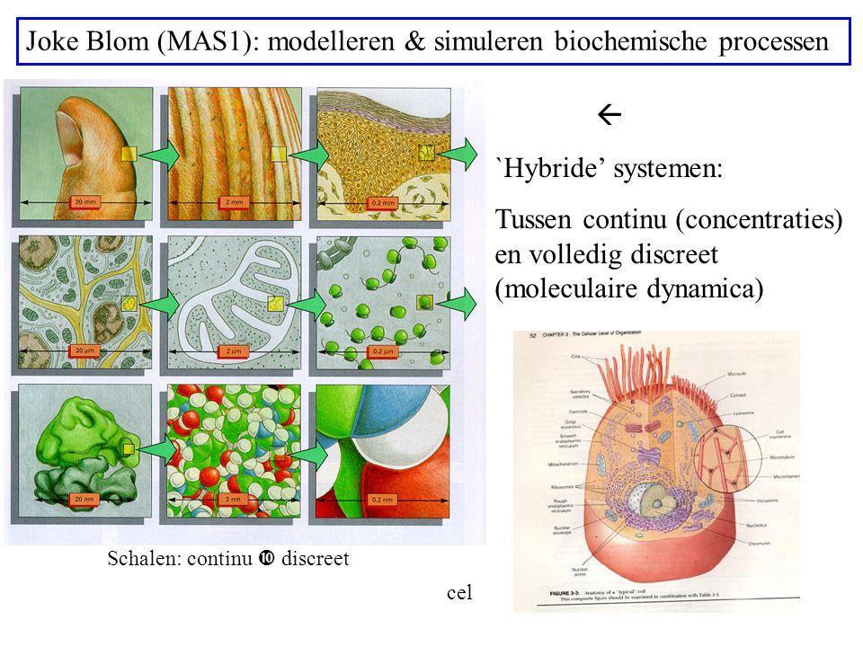 Joke Blom (MAS1): modelleren & simuleren biochemische processen  `Hybride' systemen: Tussen continu (concentraties) en volledig discreet (moleculaire dynamica) Schalen: continu  discreet cel