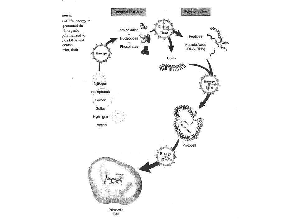 Twee processen, 1.Mutatie 2.Laterale gen-overdracht zorgen voor een hoge evolutionaire snelheid (hoge evolutionaire temperatuur)