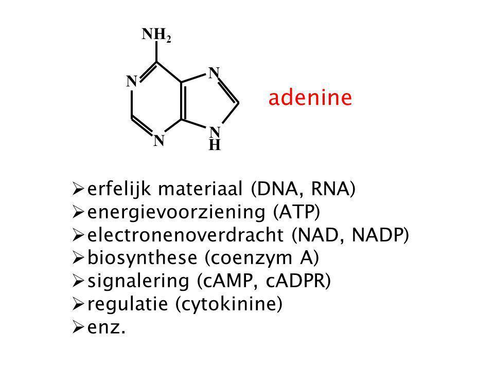 NH 2 N N N N H adenine  erfelijk materiaal (DNA, RNA)  energievoorziening (ATP)  electronenoverdracht (NAD, NADP)  biosynthese (coenzym A)  signa