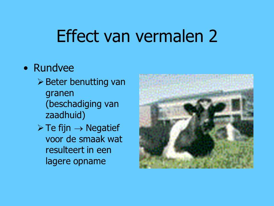 Effect van vermalen 2 Rundvee  Beter benutting van granen (beschadiging van zaadhuid)  Te fijn  Negatief voor de smaak wat resulteert in een lagere