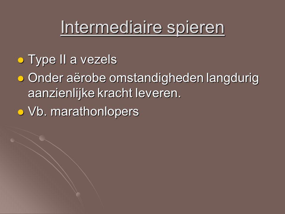 Intermediaire spieren Type II a vezels Type II a vezels Onder aërobe omstandigheden langdurig aanzienlijke kracht leveren. Onder aërobe omstandigheden