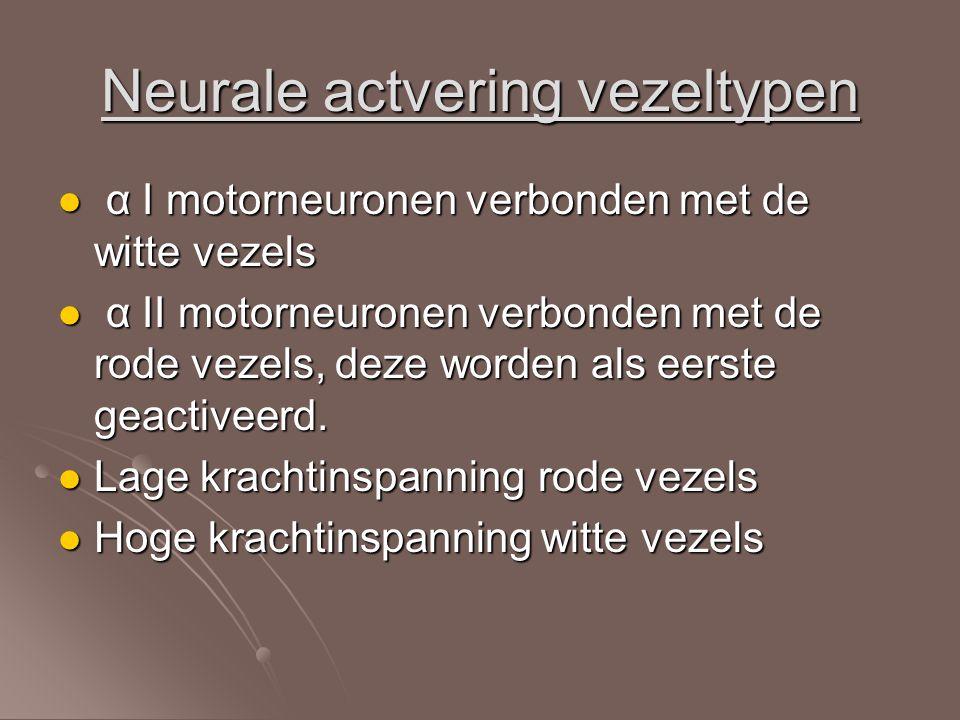 Neurale actvering vezeltypen α I motorneuronen verbonden met de witte vezels α I motorneuronen verbonden met de witte vezels α II motorneuronen verbon