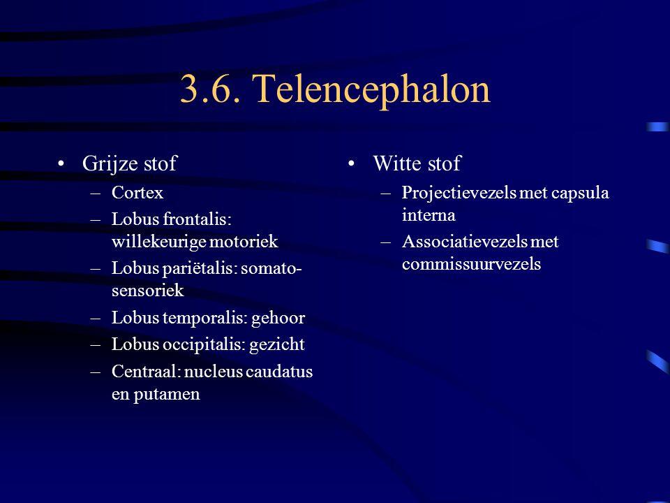 3.6. Telencephalon Grijze stof –Cortex –Lobus frontalis: willekeurige motoriek –Lobus pariëtalis: somato- sensoriek –Lobus temporalis: gehoor –Lobus o