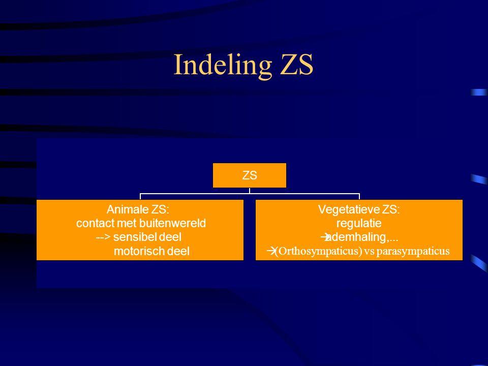 Indeling ZS ZS Animale ZS: contact met buitenwereld --> sensibel deel motorisch deel Vegetatieve ZS: regulatie ademhaling,...