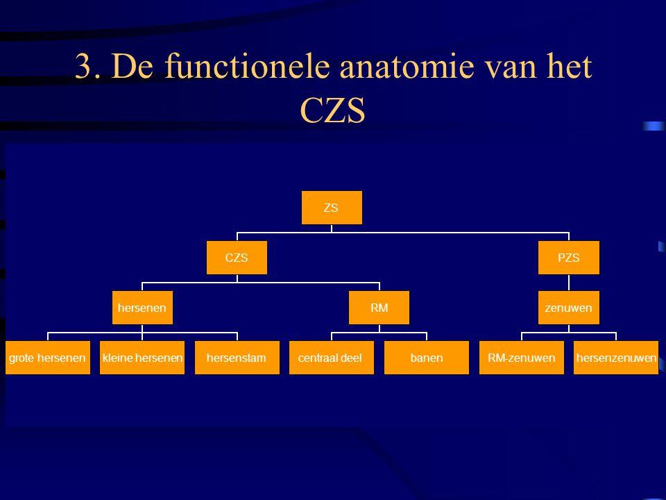 3. De functionele anatomie van het CZS ZS CZS hersenen grote hersenenkleine hersenenhersenstam RM centraal deelbanen PZS zenuwen RM-zenuwenhersenzenuw