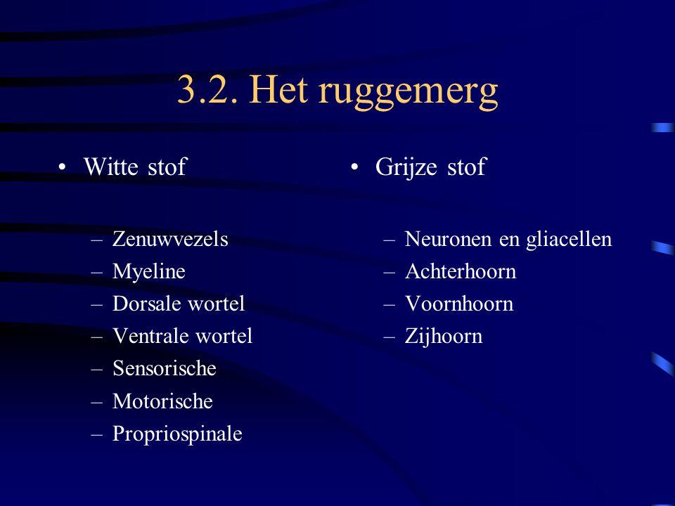 3.2. Het ruggemerg Witte stof –Zenuwvezels –Myeline –Dorsale wortel –Ventrale wortel –Sensorische –Motorische –Propriospinale Grijze stof –Neuronen en