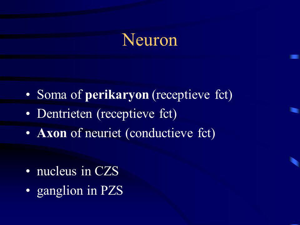 Neuron Soma of perikaryon (receptieve fct) Dentrieten (receptieve fct) Axon of neuriet (conductieve fct) nucleus in CZS ganglion in PZS