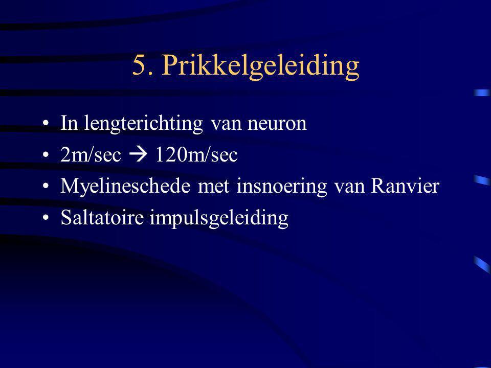 5. Prikkelgeleiding In lengterichting van neuron 2m/sec  120m/sec Myelineschede met insnoering van Ranvier Saltatoire impulsgeleiding