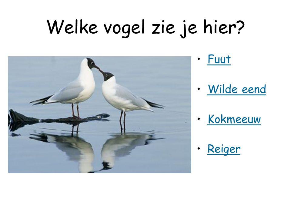 Welke vogel zie je hier? Fuut Wilde eend Kokmeeuw Reiger